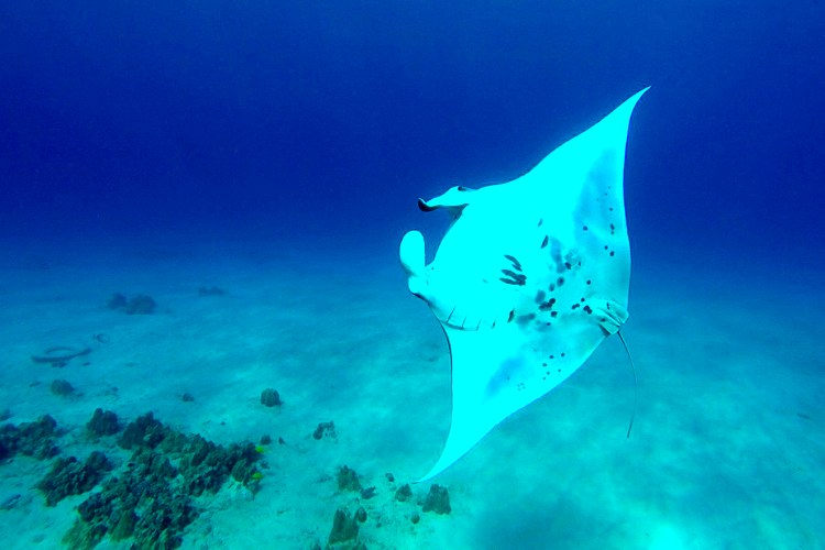 Sunset Manta Ray Snorkel