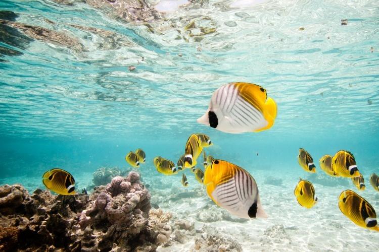 Rarotonga & Aitutaki Highlights
